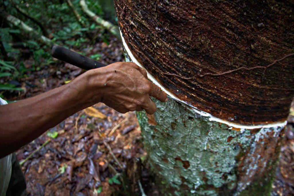 Peru – Tree sap brings prosperity