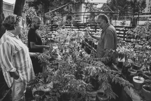 Cudisevich and his friends maintain a garden where they grow cuttings of plants they later plant in public spaces of Caracas.
