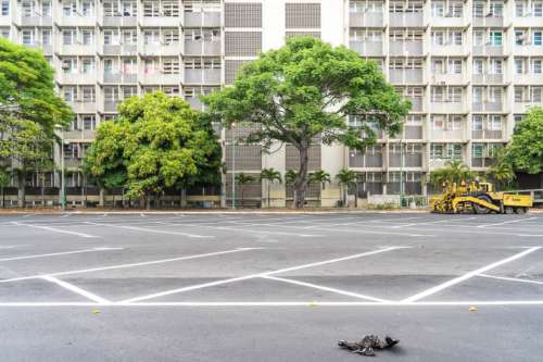 The electricity came back on Tuesday, the water on Thursday. That same Thursday, I visited the Venezuelan Central University. I walked alone that day through the sprawling university grounds. Only a few guards looked curiously after me. The university was closed all week, due to the energy crisis. There was a dead vulture in the parking lot behind the Faculty of Pharmacy building.