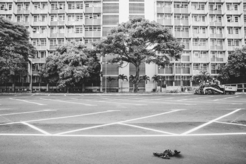 One afternoon, Cudisevich and some friends were walking over the deserted campus of the Central University of Venezuela. The university had closed all week, due to power outages. A dead vulture was lying in a parking lot. It seemed like a proper symbol for the state of the country.